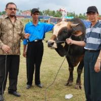 Juara II Sapi Jantan Simmental dari Kota Solok